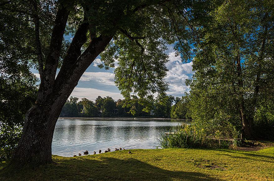 Enten am Weßlinger See