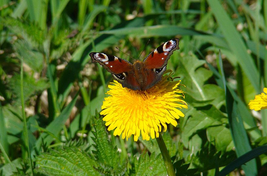 Impressionen vom Weßlinger See - Schmetterling